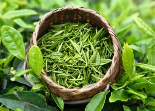 喝绿茶有减肥的功效?喝绿茶减肥管住嘴自己的_减肥图片