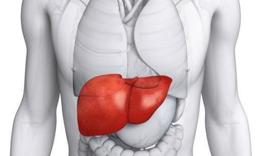 肝硬化性肾损害有哪些分类?肝硬化性肾损害做哪些检查?
