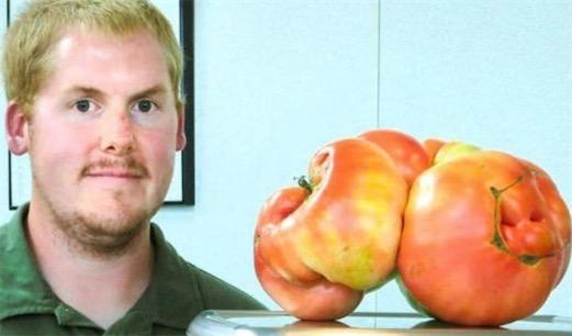 世界上最大的番茄 美国明尼苏达州男子培育出4公斤重番茄