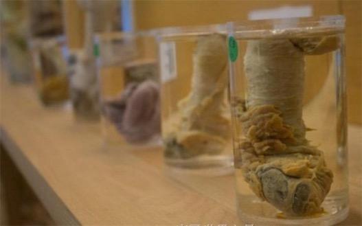世界上收藏最多阴茎的博物馆 冰岛阴茎博物馆共收藏280件阴茎