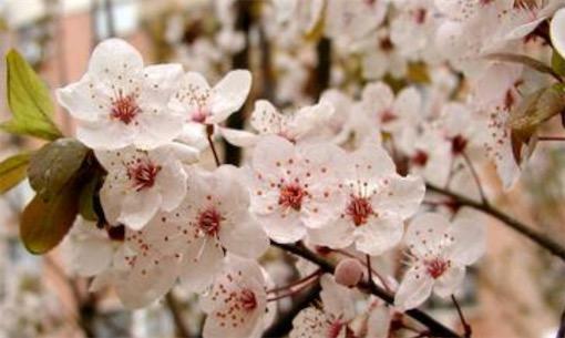 植物界的最大家族 全世界被子植物共有20多万种