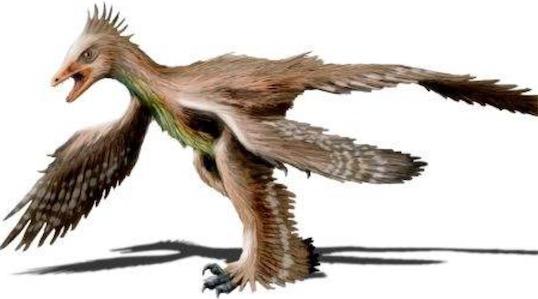 翅膀最多的鸟 非洲奇禽四翼鸟有四只翅膀