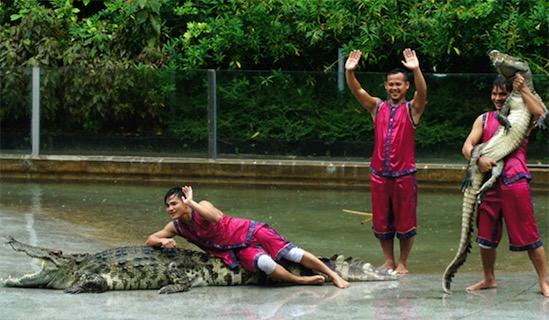 最大的鳄鱼公园 广州鳄鱼公园占地2000余亩
