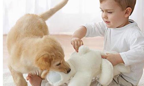 孩子被宠物咬伤怎么办 怎样让孩子与宠物安全相处