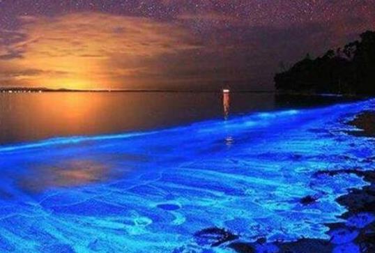 中国香港海滩近日在夜晚发出蓝色荧光,场面奇幻绚丽宛如置身仙境一般。中国香港荧光海滩的海边现蓝色浪漫荧光海,宛如阿凡达世界。夜晚时而可以看到大片泛蓝的海水,犹如蓝色星海,美轮美奂,浪漫无比。荧光海现象在世界其它地方也出现过,例如著名旅游景点马尔代夫。然而,海洋生物学家警告称,这种奇异的蓝色光芒源于水华,其对海洋生物具有危害性。 二、贝壳海滩