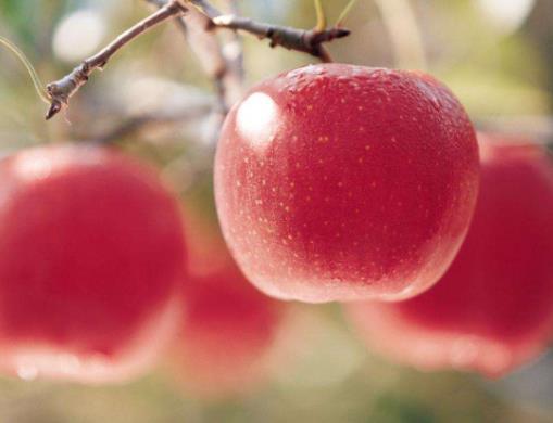 世界公认最健康的十大水果排名,苹果、香蕉增强免疫力