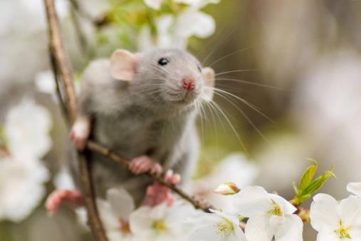 耐养便宜的宠物排行榜,花枝鼠容易饲养,麝香龟淘气好玩