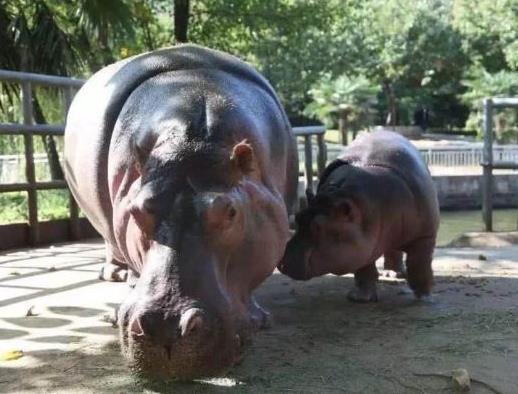 中国十大最受欢迎动物园,广州长隆野生动物世界、上海野生动物园受欢迎