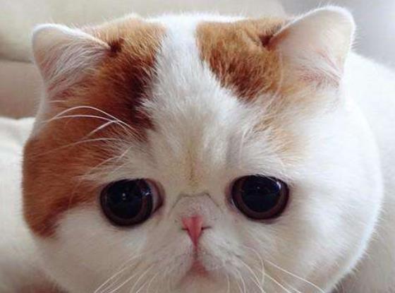 排行榜  世界各地五大动物奇闻 1,最幸运的流浪小猫继承千万欧元 2,最