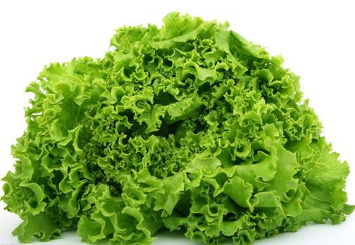 生菜的营养价值