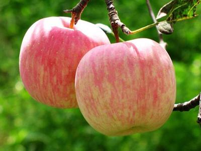 苹果皮有营养吗?苹果皮的营养价值与作用