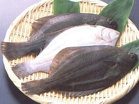 鸦片鱼的营养价值-鸦片鱼的食疗作用