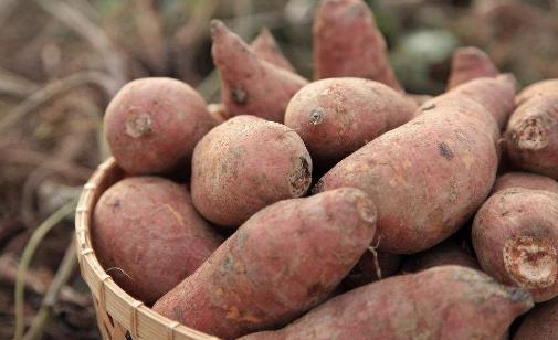 地瓜营养价值高 常吃地瓜有5大好处