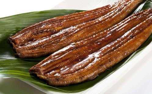 日本鳗遇严重鱼荒 鳗鱼的营养价值 吃鳗鱼有6大好处