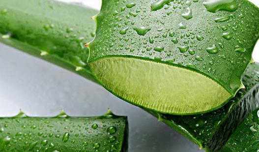 吃芦荟有哪些副作用?芦荟有哪些药用价值?