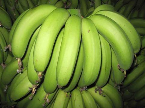 怎样识别催熟香蕉?鉴别催熟香蕉的方法