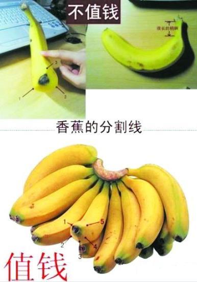 是香蕉还是芭蕉?芭蕉和香蕉的区别