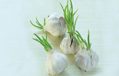 大蒜发芽了还能吃吗?大蒜有哪些功效及作用