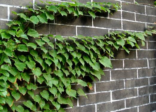 室内种植物对人体有哪些好处?芳香植物对人体的作用