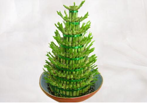 富贵竹叶子发黄怎么办?富贵竹怎么水养?