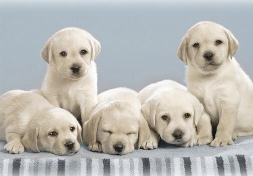 小狗吃什么最好?小狗吃多了怎么办?