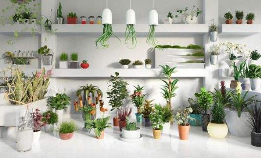 家里养什么植物好?哪些植物防辐射?