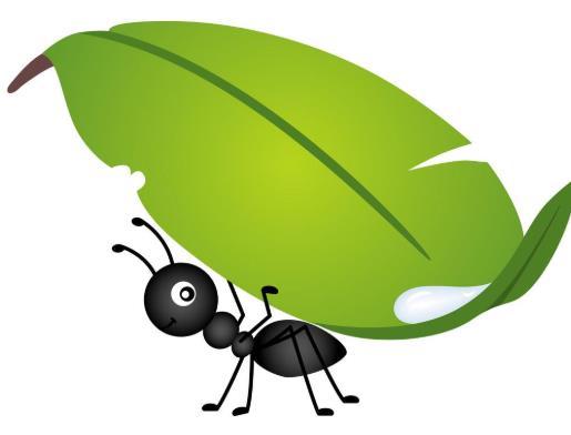 锅台有蚂蚁怎么处理?蚂蚁对人有危害吗?