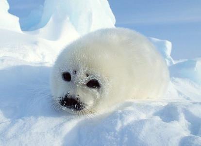 3月1日是什么节日?国际海豹日是