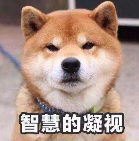 [稳如老狗是什么意思稳如老狗是什么意思]稳如老狗是什么意思?稳如老狗是什么梗?形容人稳重有经验有安全感
