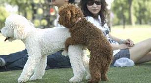 泰日天是什么意思什么梗?泰迪狗为什么叫泰日天 日天日地日空气