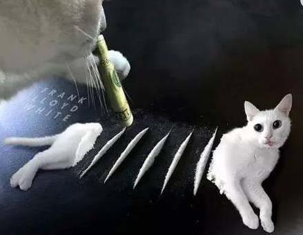 吸猫是什么意思百度百科_吸猫是什么意思什么梗?猫咪有毒啊?一日吸猫,终身养猫想猫成猫奴