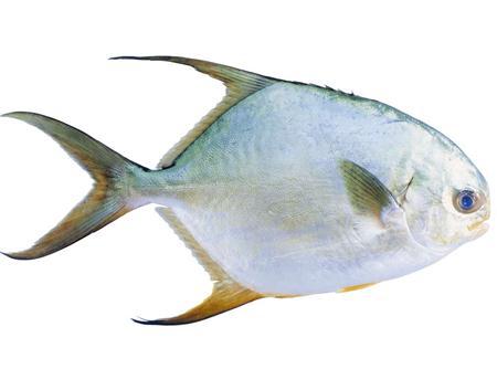 鲳鱼的营养价值-鲳鱼的食疗功效