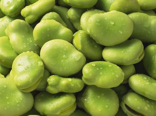 蚕豆的功效与作用-蚕豆的营养价值-蚕豆的食用功效