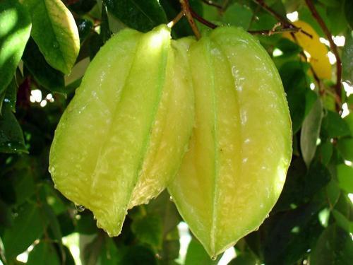 杨桃的功效与作用-杨桃的营养价值