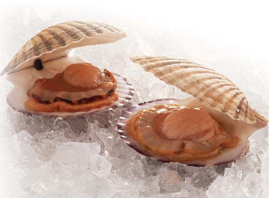 扇贝的营养价值-吃扇贝的好处