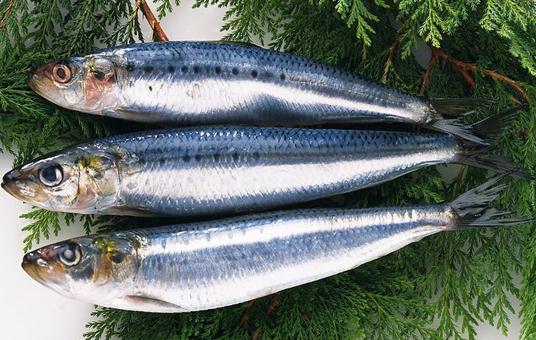 青鱼的营养价值-青鱼怎么做好吃