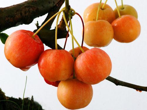 海棠果的功效与作用-海棠果的营养价值