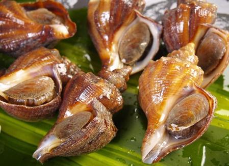 海螺的营养价值-海螺的食疗作用
