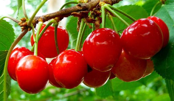 樱桃的营养价值-樱桃的功效与作用