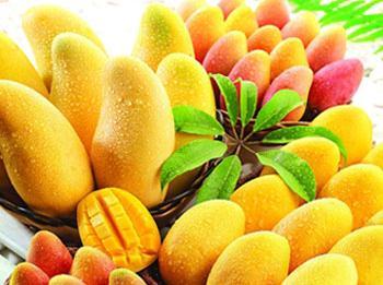 芒果的功效与作用-芒果的营养价值