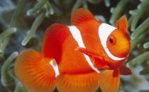 四招挑选鲜鱼的小妙招