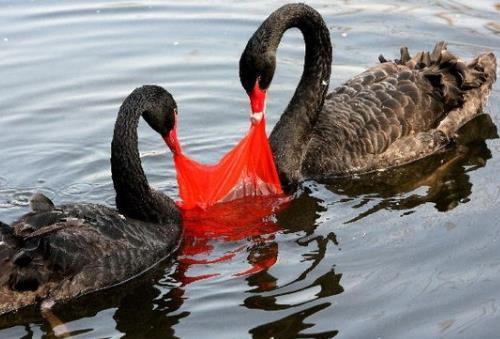 塑料袋对环境的危害有哪些?塑料袋的毒性