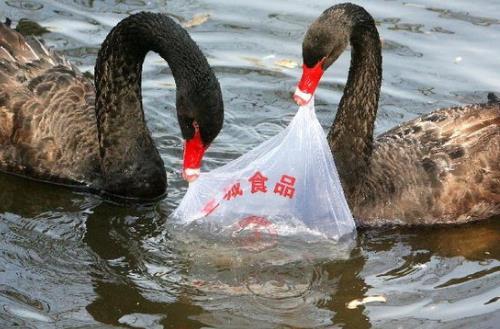 乱扔塑料袋对环境有什么危害