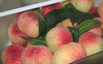 这些水果放冰箱只会烂得更快