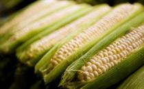 玉米吃多了会胖吗?玉米的功效