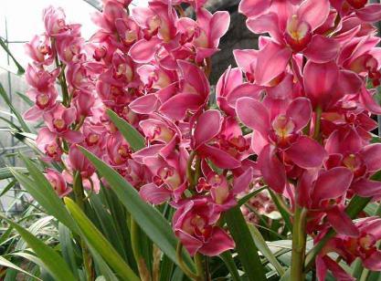 什么花适合放在室内养?适合居室摆放的九种花卉