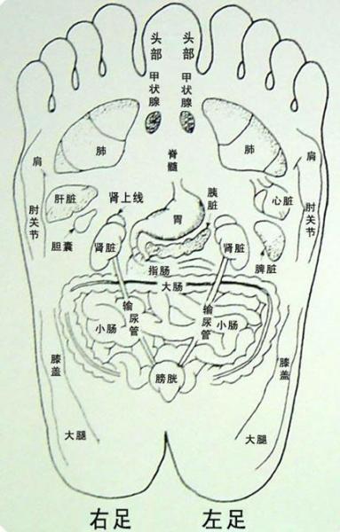人体脚部穴位图:人体足部高清穴位示意图解