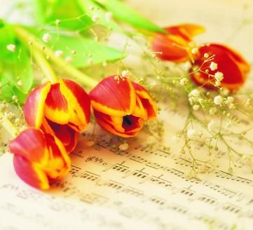 什么节日送什么花好?花语与中国送礼用花习俗