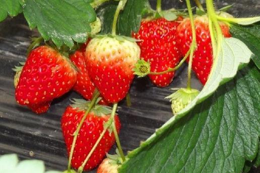 春天不宜吃的水果有哪些-360常识