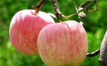 苹果竟是最肮脏的水果?怎么吃苹果才健康?